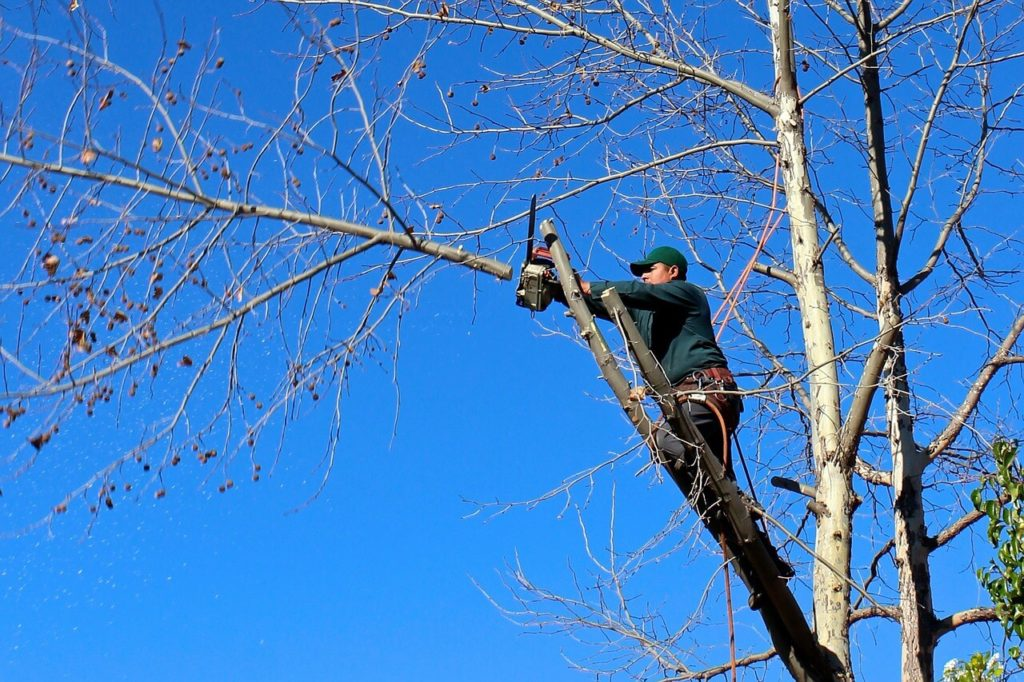 Contact Us-Coral Springs FL Tree Trimming and Stump Grinding Services-We Offer Tree Trimming Services, Tree Removal, Tree Pruning, Tree Cutting, Residential and Commercial Tree Trimming Services, Storm Damage, Emergency Tree Removal, Land Clearing, Tree Companies, Tree Care Service, Stump Grinding, and we're the Best Tree Trimming Company Near You Guaranteed!