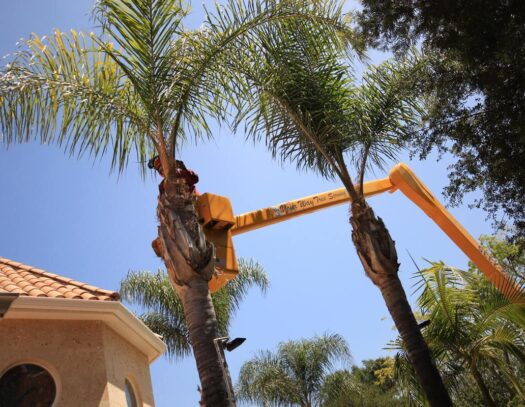 Palm Tree Trimming-Coral Springs FL Tree Trimming and Stump Grinding Services-We Offer Tree Trimming Services, Tree Removal, Tree Pruning, Tree Cutting, Residential and Commercial Tree Trimming Services, Storm Damage, Emergency Tree Removal, Land Clearing, Tree Companies, Tree Care Service, Stump Grinding, and we're the Best Tree Trimming Company Near You Guaranteed!