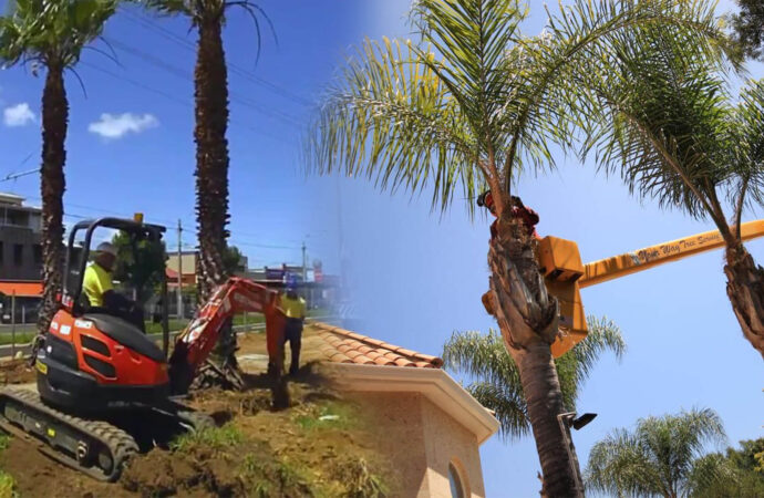 Palm tree trimming & palm tree removal-Coral Springs FL Tree Trimming and Stump Grinding Services-We Offer Tree Trimming Services, Tree Removal, Tree Pruning, Tree Cutting, Residential and Commercial Tree Trimming Services, Storm Damage, Emergency Tree Removal, Land Clearing, Tree Companies, Tree Care Service, Stump Grinding, and we're the Best Tree Trimming Company Near You Guaranteed!