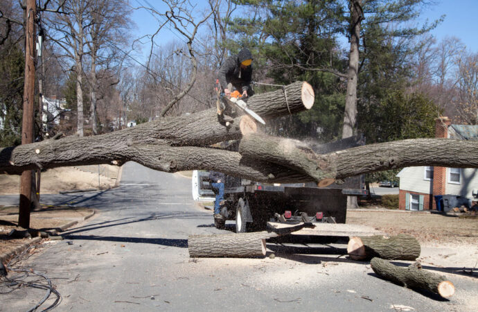 Residential Tree Services-Coral Springs FL Tree Trimming and Stump Grinding Services-We Offer Tree Trimming Services, Tree Removal, Tree Pruning, Tree Cutting, Residential and Commercial Tree Trimming Services, Storm Damage, Emergency Tree Removal, Land Clearing, Tree Companies, Tree Care Service, Stump Grinding, and we're the Best Tree Trimming Company Near You Guaranteed!