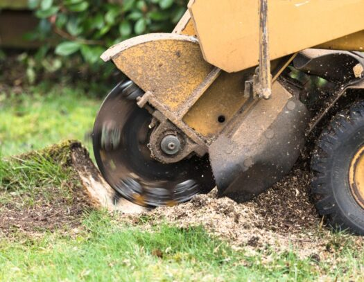 Stump Grinding-Coral Springs FL Tree Trimming and Stump Grinding Services-We Offer Tree Trimming Services, Tree Removal, Tree Pruning, Tree Cutting, Residential and Commercial Tree Trimming Services, Storm Damage, Emergency Tree Removal, Land Clearing, Tree Companies, Tree Care Service, Stump Grinding, and we're the Best Tree Trimming Company Near You Guaranteed!