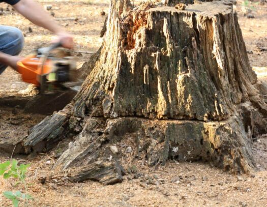 Stump Removal-Coral Springs FL Tree Trimming and Stump Grinding Services-We Offer Tree Trimming Services, Tree Removal, Tree Pruning, Tree Cutting, Residential and Commercial Tree Trimming Services, Storm Damage, Emergency Tree Removal, Land Clearing, Tree Companies, Tree Care Service, Stump Grinding, and we're the Best Tree Trimming Company Near You Guaranteed!