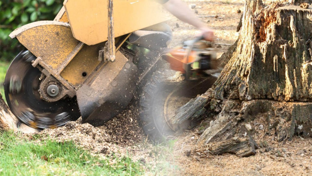 Stump grinding & removal-Coral Springs FL Tree Trimming and Stump Grinding Services-We Offer Tree Trimming Services, Tree Removal, Tree Pruning, Tree Cutting, Residential and Commercial Tree Trimming Services, Storm Damage, Emergency Tree Removal, Land Clearing, Tree Companies, Tree Care Service, Stump Grinding, and we're the Best Tree Trimming Company Near You Guaranteed!