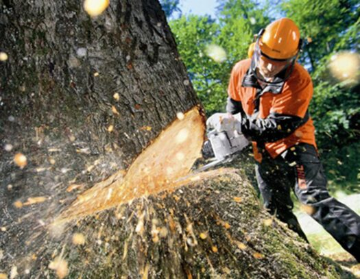Tree Cutting-Coral Springs FL Tree Trimming and Stump Grinding Services-We Offer Tree Trimming Services, Tree Removal, Tree Pruning, Tree Cutting, Residential and Commercial Tree Trimming Services, Storm Damage, Emergency Tree Removal, Land Clearing, Tree Companies, Tree Care Service, Stump Grinding, and we're the Best Tree Trimming Company Near You Guaranteed!