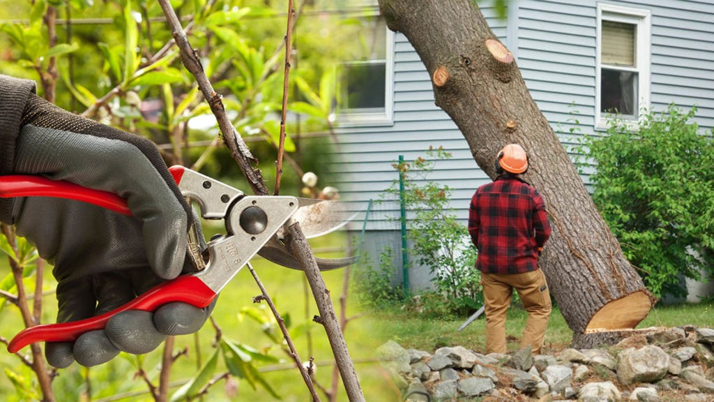 Tree pruning & tree removal-Coral Springs FL Tree Trimming and Stump Grinding Services-We Offer Tree Trimming Services, Tree Removal, Tree Pruning, Tree Cutting, Residential and Commercial Tree Trimming Services, Storm Damage, Emergency Tree Removal, Land Clearing, Tree Companies, Tree Care Service, Stump Grinding, and we're the Best Tree Trimming Company Near You Guaranteed!